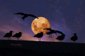 Gulls on a full moon